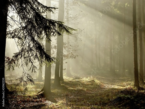 Photo sur Toile Bestsellers Coniferous forest at the end of autumn