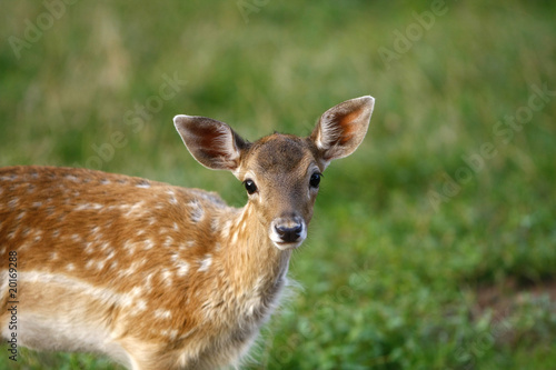 Bambi #2 плакат