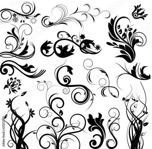 Fotografía  Vector floral set
