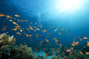 Fototapeta na wymiar ocean, coral and fish