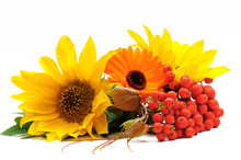 Sunflowers And Ashberry