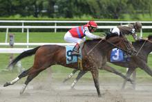 Horse Racing At Belmont Track Long Island NY
