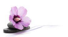 Image Décoration Zen, Relaxat...