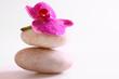 orchidee,steine