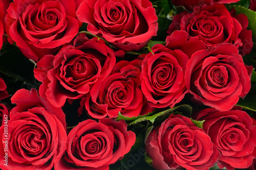Red roses #20334667
