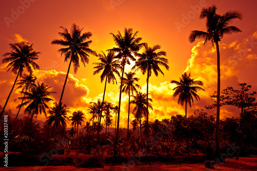 Deurstickers Oranje eclat Coconut palms on sand beach in tropic on sunset