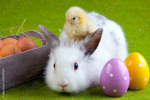 Photo  Chick and Bunny