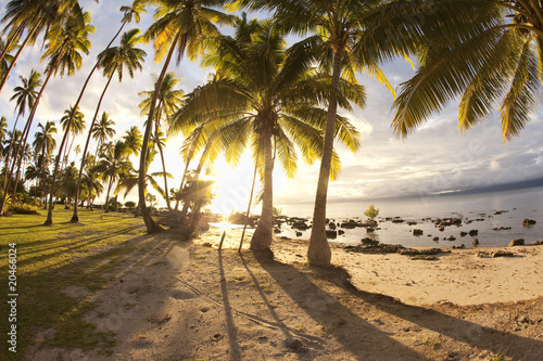 Photo Stands Tropical beach Palm trees at sunrise, Fiji