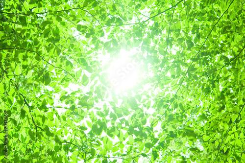 葉の背景 - 20474631