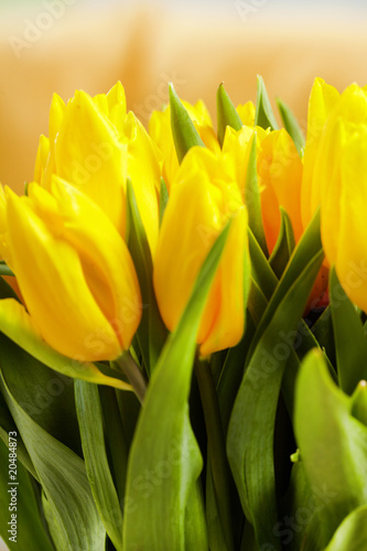 Printed kitchen splashbacks Tulip Yellow tulips