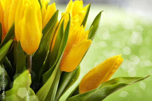 Wall Murals Tulip Yellow tulips
