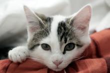 Müdes Kätzchen