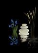 Zen Garden Beauty