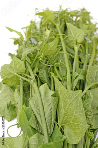 Paquet Brede Chouchou Legume Creole Fond Blanc Buy This Stock