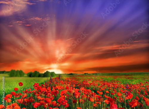 Foto op Plexiglas Klaprozen Flowers