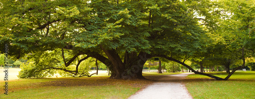 Foto op Canvas Weg in bos Centenary linden from Cheverny Chateau gardens. France