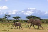 Fototapeta Sawanna - Elefanten vor dem Kilimanjaro
