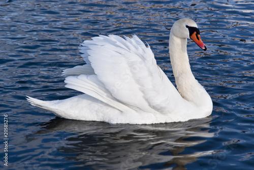 Deurstickers Zwaan white swan