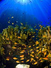 Fototapeta na wymiar Reef & Rays