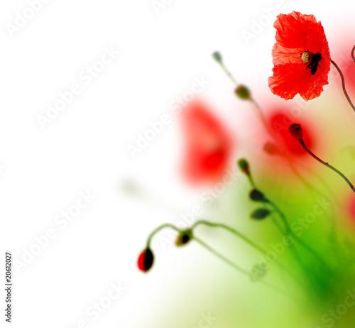 Beautiful watercolor Poppy border