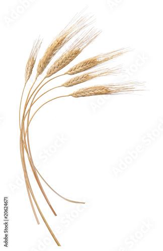 Valokuva  grano
