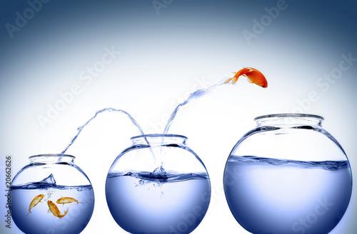 goldfish jumping Wallpaper Mural