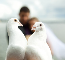 Two Pigeons And Newlyweds