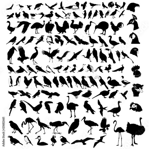 Fotomural collection of bird
