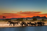 Fototapeta Sawanna - Herd of elephants in african savanna