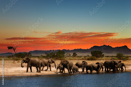 Staande foto Afrika Herd of elephants in african savanna