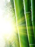 Bambusy w promieniach słońca