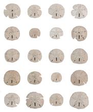 Sand Dollar Sea Shell Collage ...
