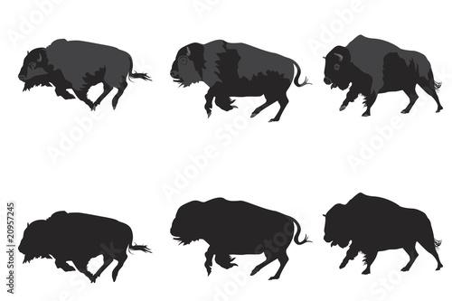 Fotografie, Obraz  American bison galloping