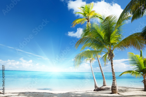 Foto-Schiebegardine Komplettsystem - Caribbean sea and coconut palms