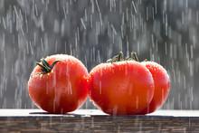 Tomatoes In The Rain