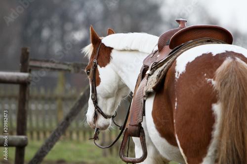 La pose en embrasure Equitation Pferd wartet