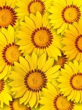 Mittagsblumen Midday Flowers