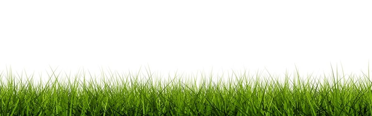Grass closeup isolated on white