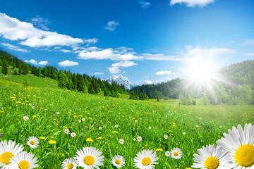 Naklejka Frühling in den Alpen mit Margeriten und Blumenwiese