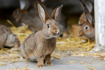 Junge Kaninchen