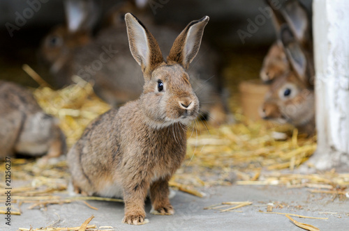 Fotografie, Obraz  Junge Kaninchen