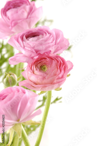 Bouquet of dahlia flower