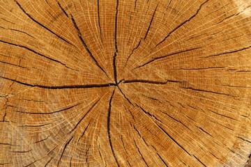 Panel Szklany Skandynawski legno