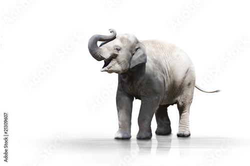Foto op Aluminium Olifant Junger Elefant wd607