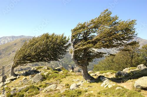 Fotografie, Obraz  Wind und Baum