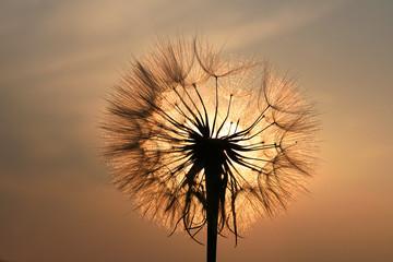fototapeta dmuchawiec w zachodzie słońca
