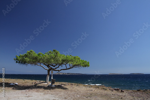 solitary tree on a cliff, Lesbos, Greece Canvas Print