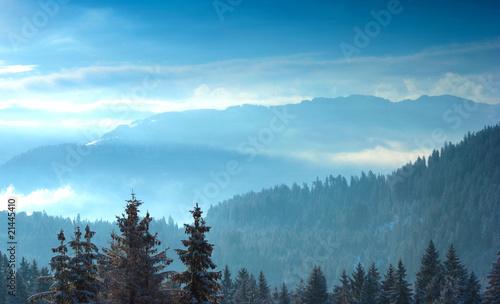 Aluminium Prints Alpine trees with snow at sunrise