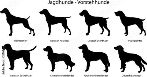 Foto  Jagdhunde - Vorstehhunde