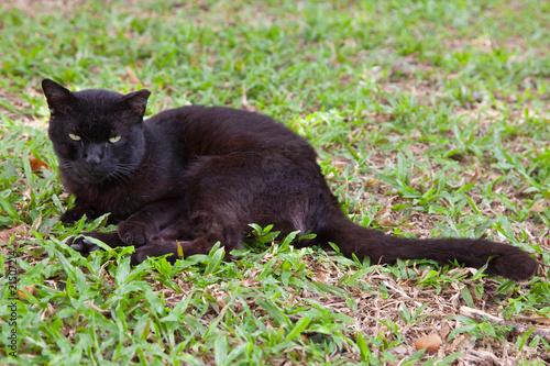 Fotografia, Obraz  wild cat glares